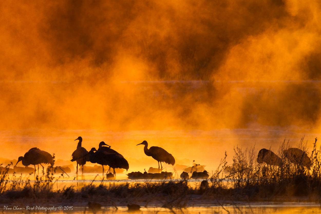 Misty Cranes at Bosque del Apache
